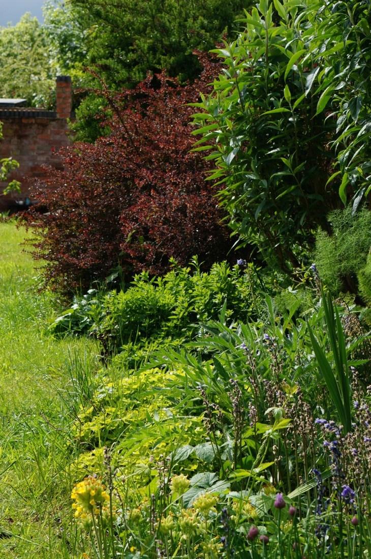 Garden-in-May-16