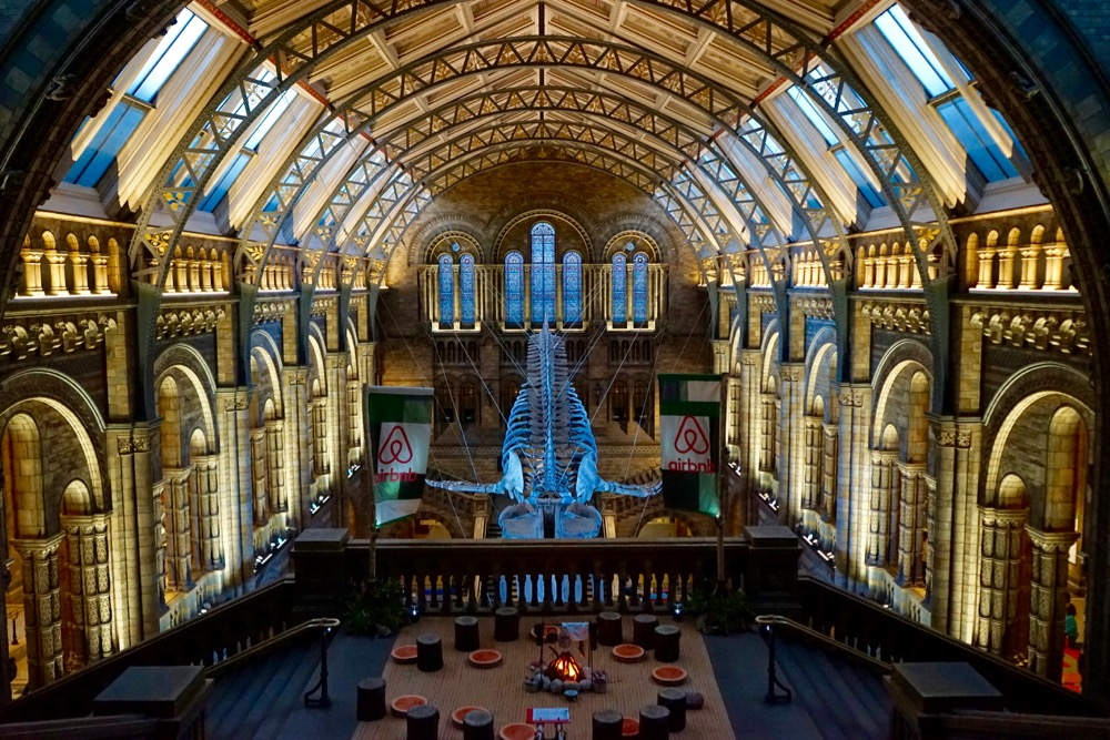 Dinosnores at the Natural History Museum and the Airbnb Base Camp Experience, London