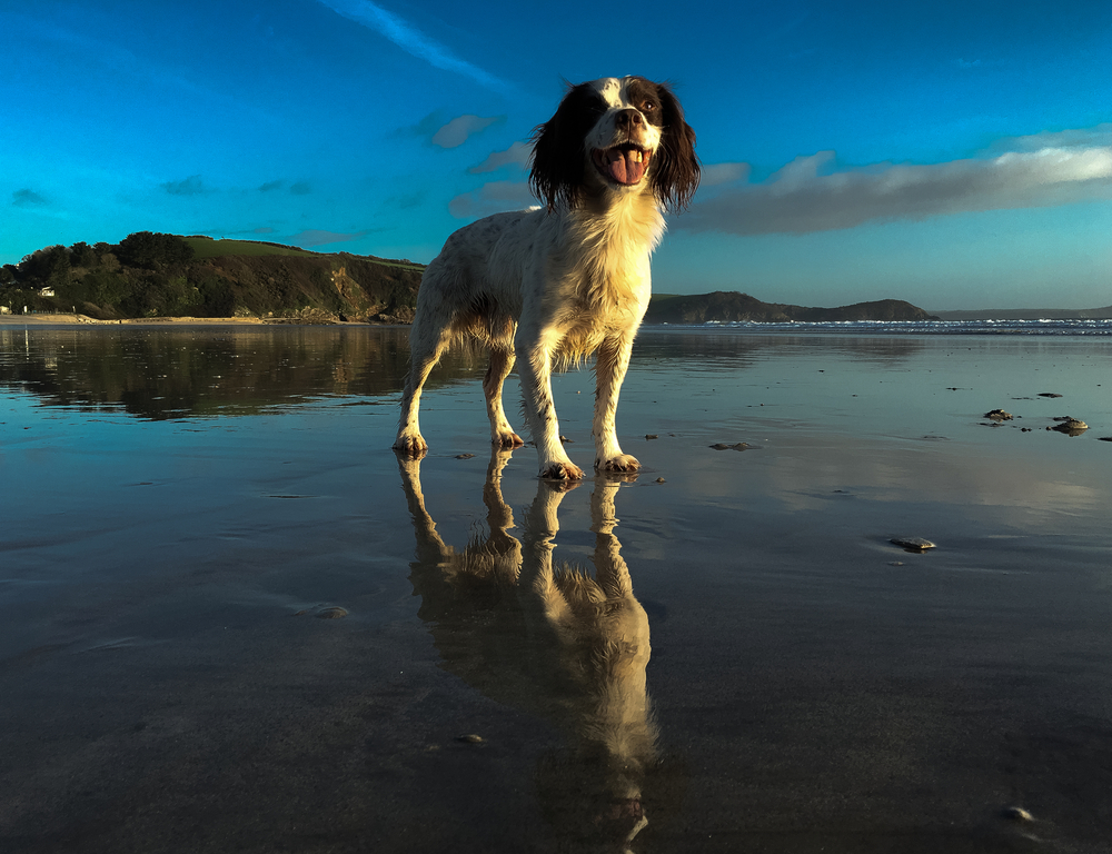Dog and Family Friendly Cornwall