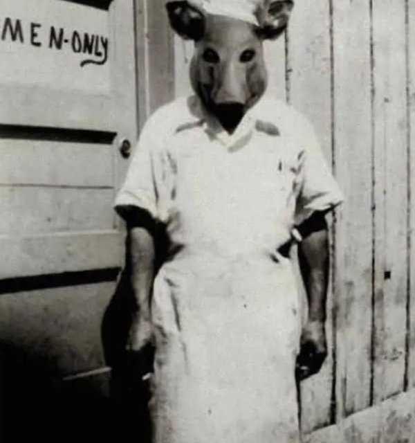 Il grosso maiale rimase deluso: L'accesso gli era stato precluso