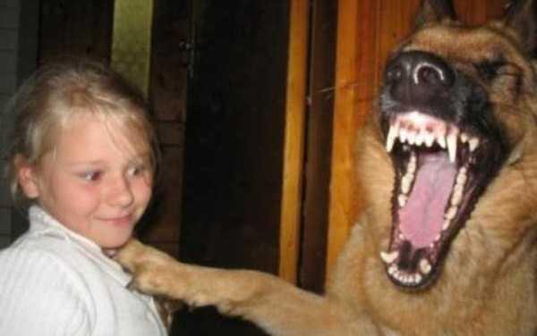 Quella battuta piacque molto al suo cane