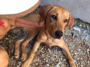 620€ récoltés pour sauver un chien abandonné à la patte cassée - 22/06/2017