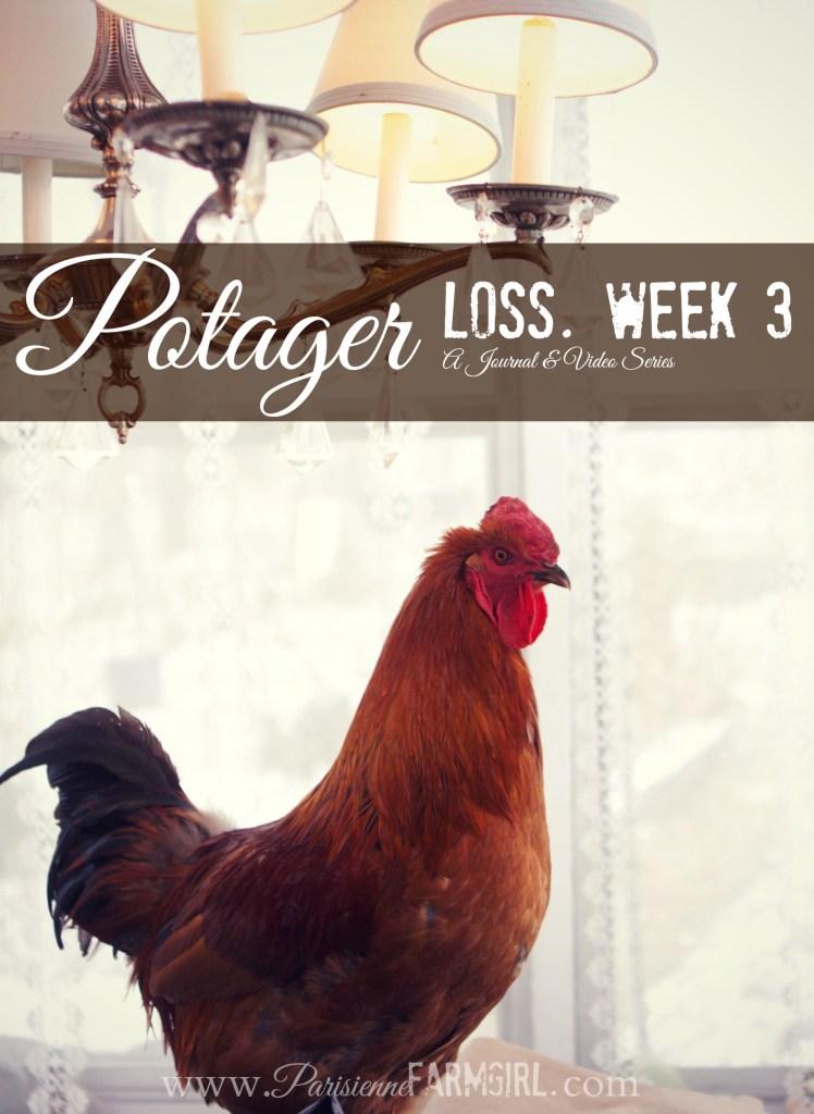 Potager progress week 3