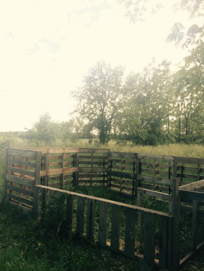 Pallet Pig Fence