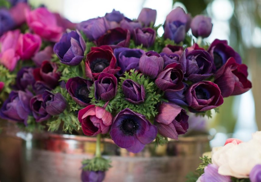 6 Gorgeous Mid Winter Flowers to Buy in Paris   Paris Perfect Mid Winter Flowers to Buy in Paris   Georgianna Lane for Paris Perfect