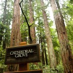 Hiking Among Giants: Muir Woods National Monument