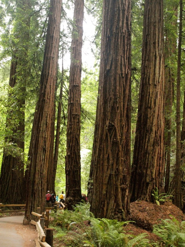 Redwood Creek Trail - Muir Woods National Monument