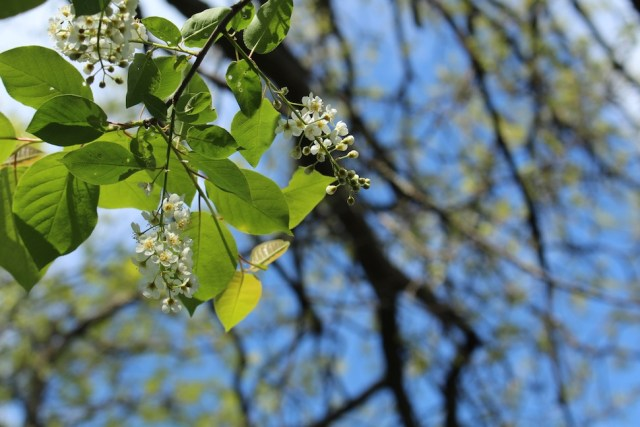 Springtime at St. Croix National Scenic Riverway