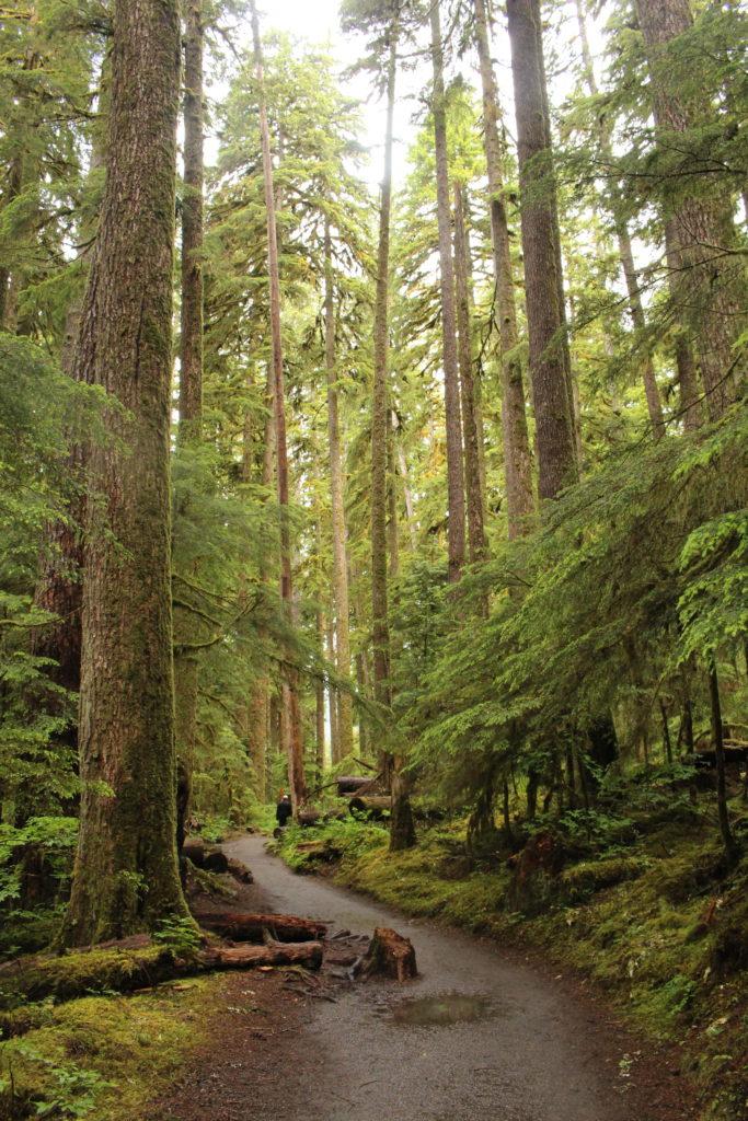 The Sol Duc Falls Trail