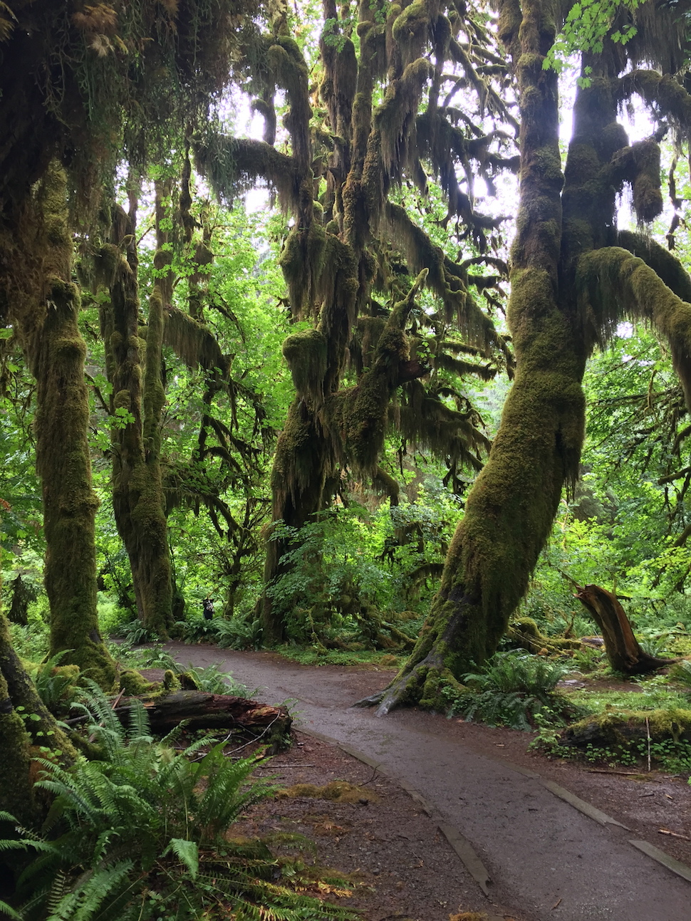 The Hoh Rain Forest - Olympic National Park