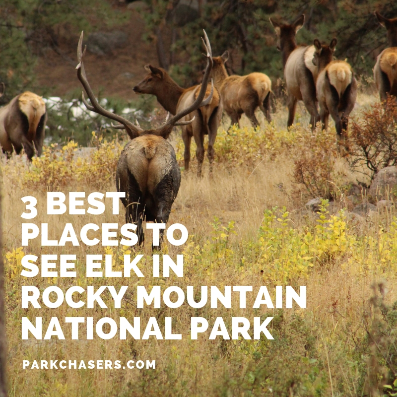 Elk in Rocky Mountain National Park