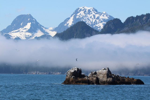 Seabirds Kenai Fjords National Park