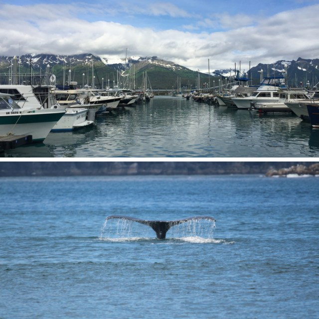 Whale and Harbor, Kenai Fjords National Park