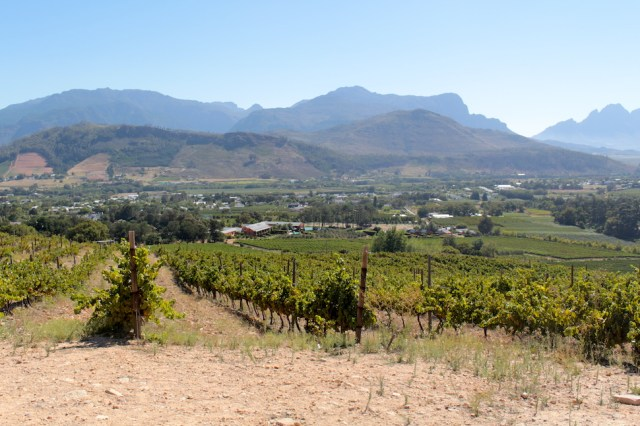 View of grapes and Franschhoek Wine Valley