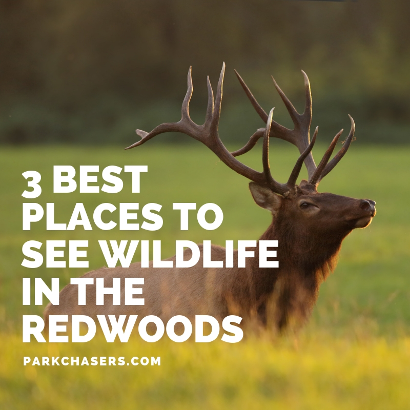 3 Best Places to See Wildlife in Redwood National Park from www.parkchasers.com
