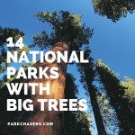14 National Parks with Big Trees