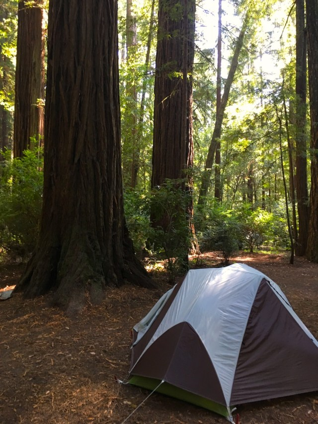 Tent in Jedediah Smith Campground