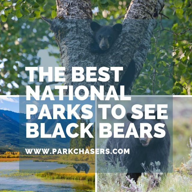 National Parks with Black Bears