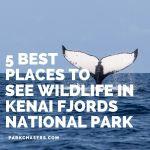 5 Best Places to See Wildlife in Kenai Fjords National Park