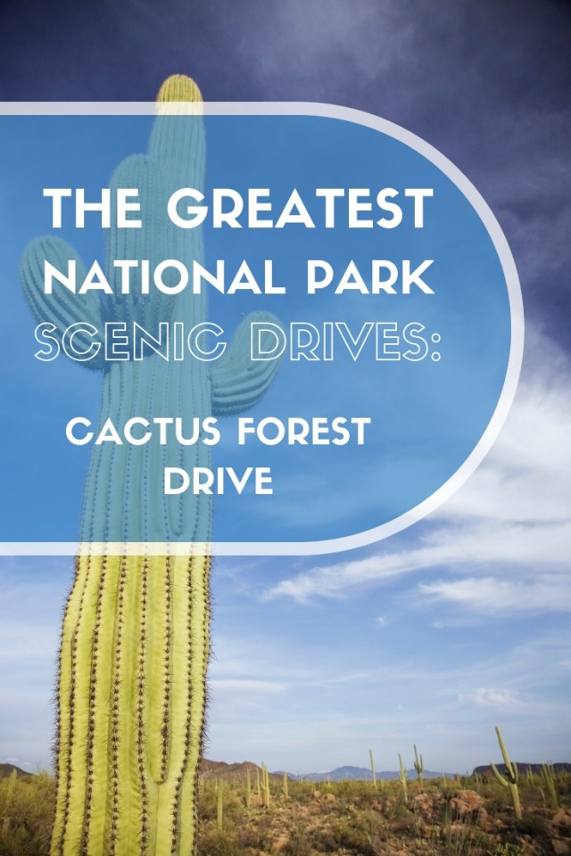 Cactus Forest Drive in Saguaro National Park