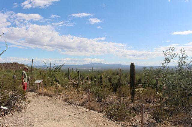 Desert Loop Trail