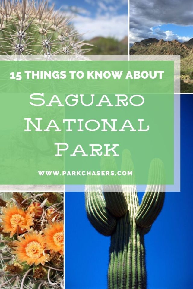15 Things to Know About Saguaro National Park