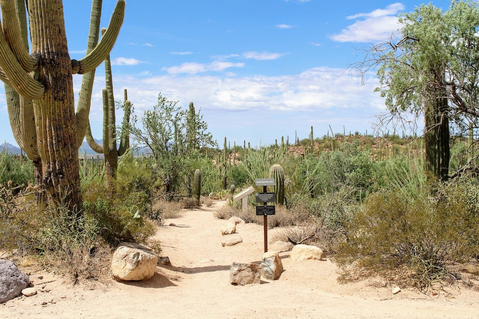 Photo of the trailhead at for the Valley View Overlook Trail in Saguaro National Park