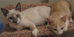 every creature counts adopt a cat dog kitten or puppy from petsmart in parker co