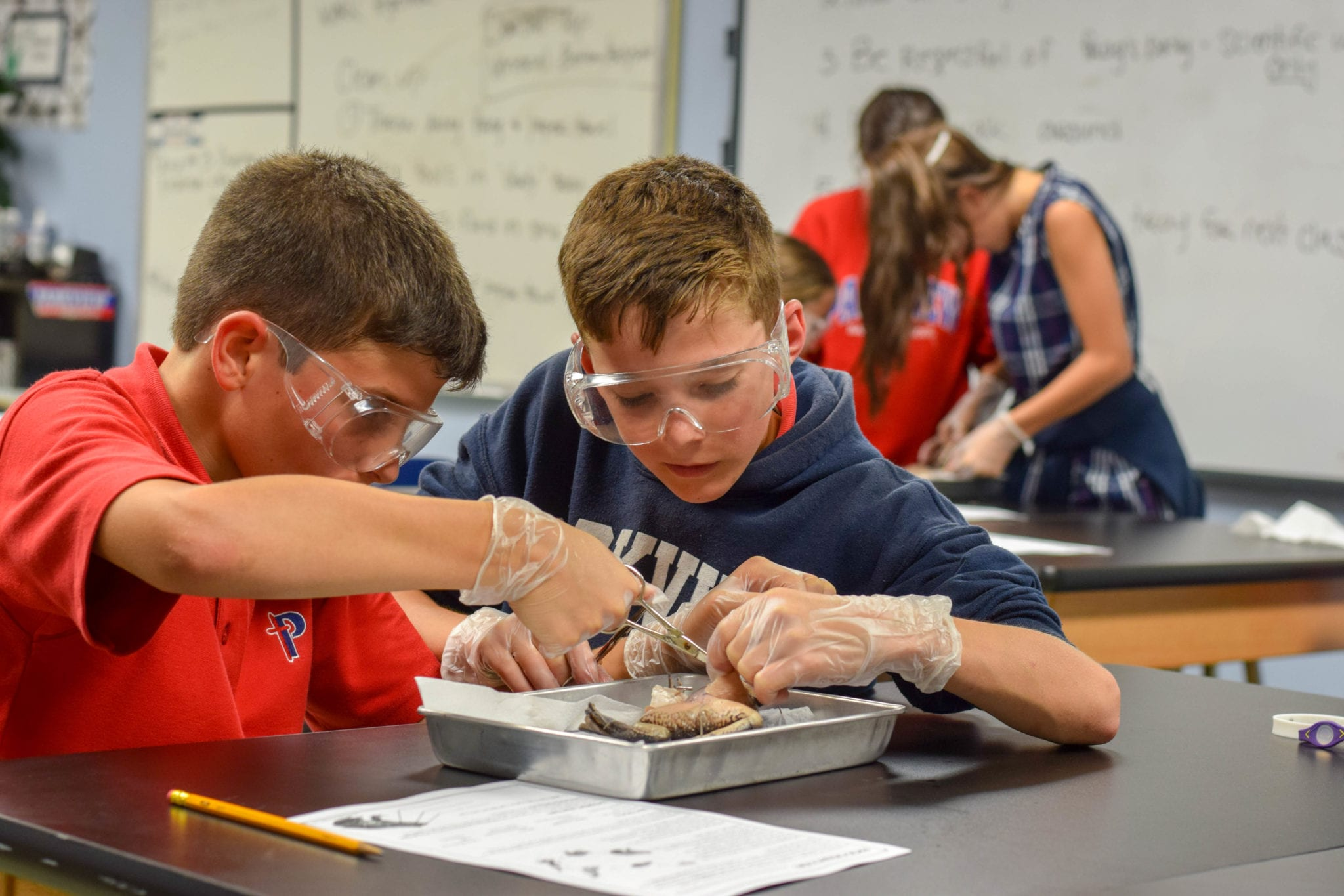 Sixth Grade Life Science Frog Dissection