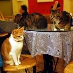 quattro gatti al bar