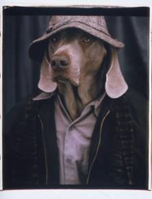 Un'immagine di William Wegman (2001)