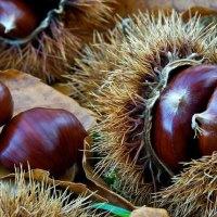 Frutta di stagione: le castagne e i marroni