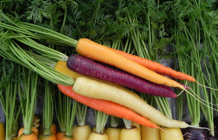 carote-parliamo-di-cucina