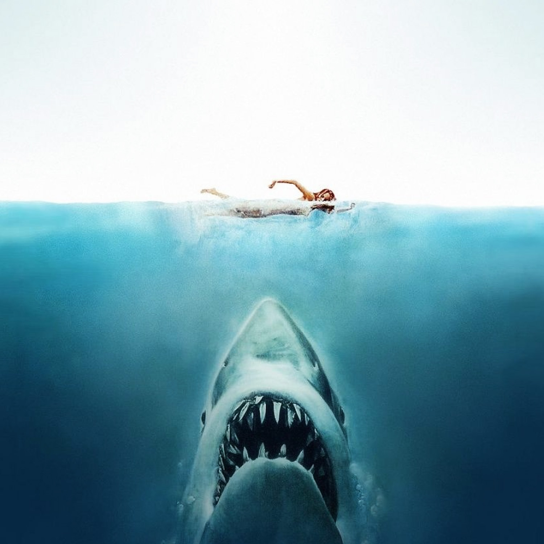 Le film de requin