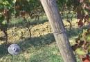 Un futuro per giovani agricoltori: intervista Camillo Donati vigneto Felino