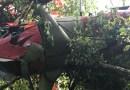 Aereo precipita sugli alberi in Val Taro.