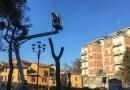Addio… ai pini marittimi di Piazza Matteotti a Fornovo
