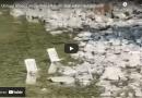 Lupo attacca un capriolo a 3 metri dagli sdraio dei bagnanti.