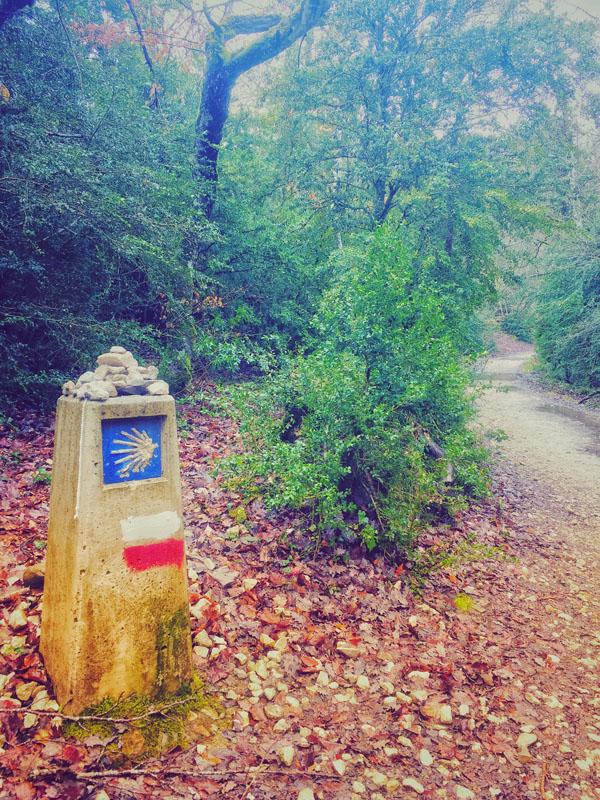 Cammino di Santiago - Boschi della Navarra