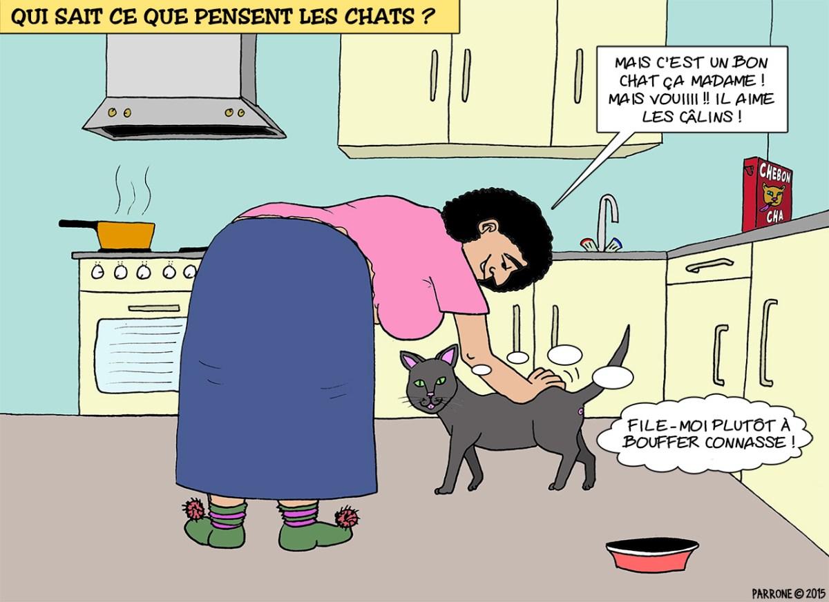 Qui sait ce que pensent les chat