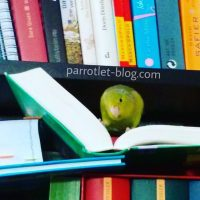 Ideas for Parrotlet Names