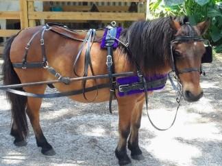 Mini & Pony