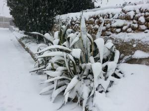 Neve a Partanna-Giuseppe_Messina1