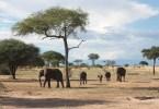 Qué ver en Tanzania