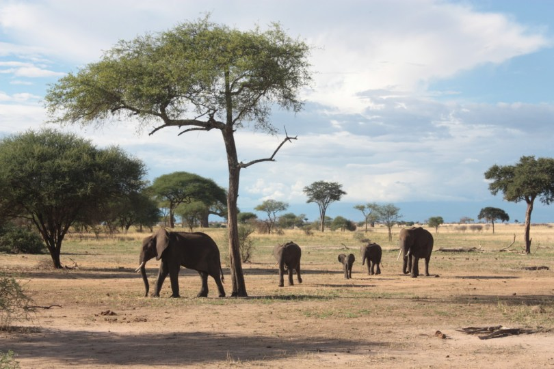 Elefantes Taranguire