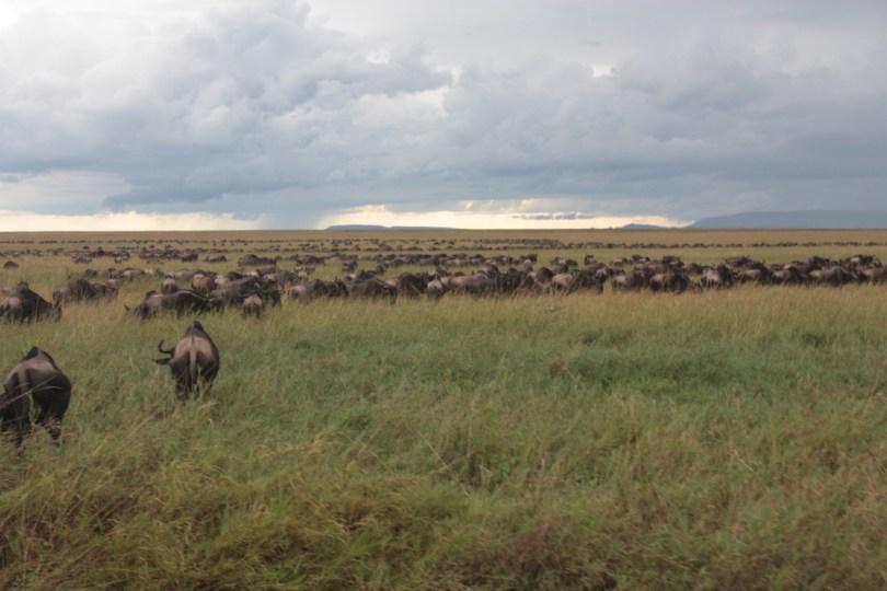 los parques nacionales de Tanzania