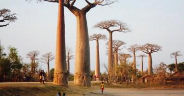 Mejor época del año para viajar a Madagascar