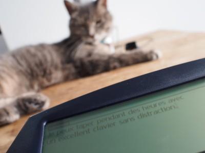 Dana Wireless timinou cat