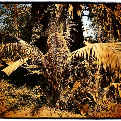 www.pascarelphoto.com