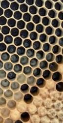 Наращивание расплода и пчелы - оптимальные сроки